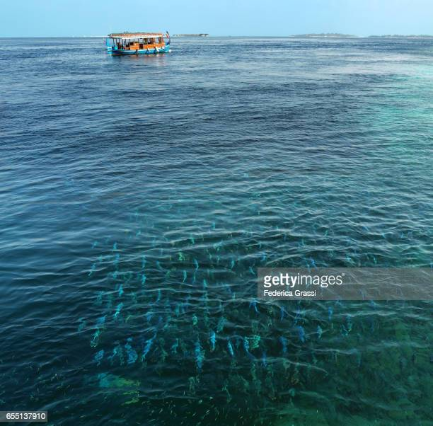 Dhoni Moored In Tropical Lagoon With School of Fish in the foreground