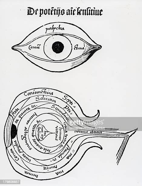 Diagram of the human eye Woodcut from ''Margarita philosophica'' 1508