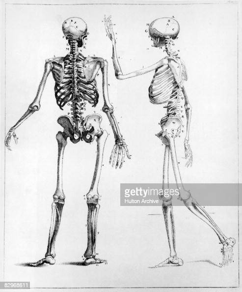A diagram showing back and side views of the human skeleton circa 1900