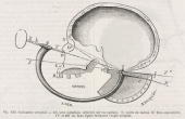 Diagram showing measurement of the occipital angle using a goniometer Illustration from �Dictionnaire des sciences anthropologiques� an...