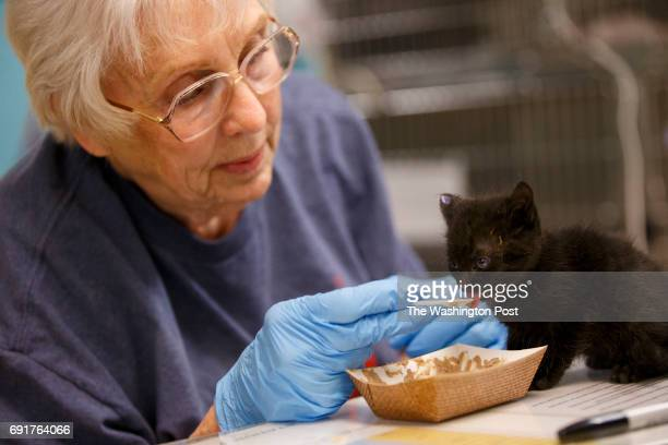 Diane Greenwaldt of Sun Valley feeds 'Valentine' a kitten at the Best Friends Animal Society shelter on Thursday April 27 2017 in Mission Hills CA...