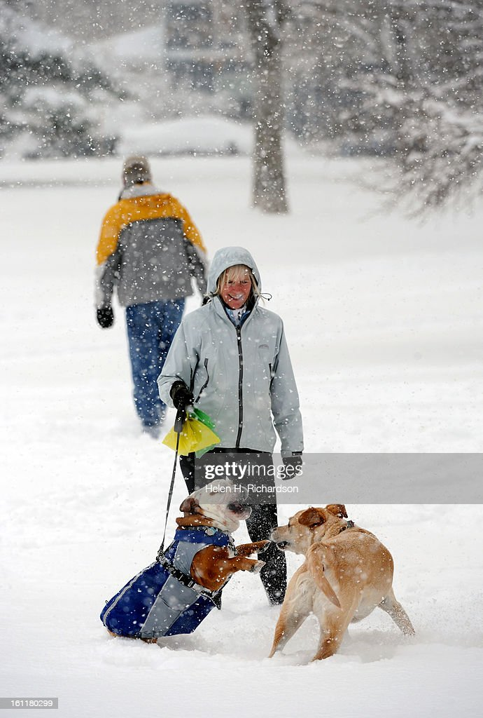 Diane Illanes watches as her english bulldog Thor plays with her neighbor's dog Bodey, the yellow lab at North Boulder Park. (Kiwi is the small Pug at right.) A cold arctic blast brought cold temperatures and upwards of 9 inches of snow in some parts of the foothills. Helen H. Richardson, The Denver Post