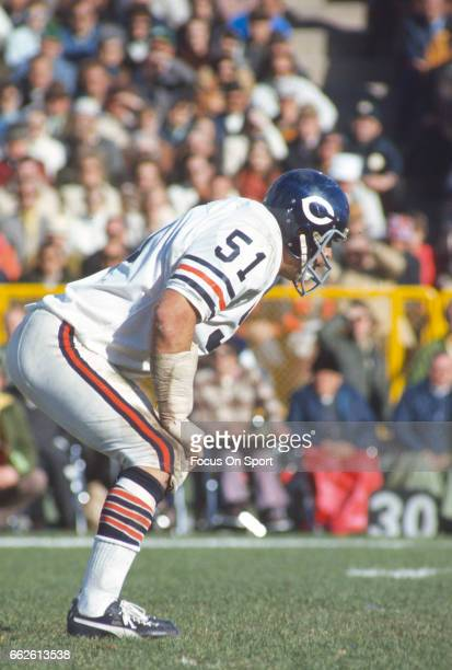 Dick Butkus of the Chicago Bears in action against the Green Bay Packers during an NFL football game November 4 1973 at Lambeau Field in Green Bay...