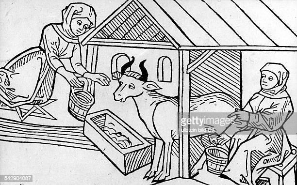 Die Milch einer Kuh wird behextHolzschnitt aus Vindler Tugendspiegel Augsburg 1486