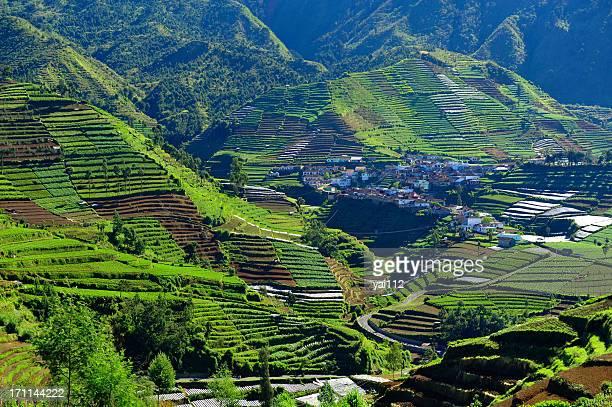 Planalto de Dieng village