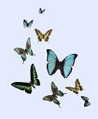 Variety of The Three-dimensional Butterflies
