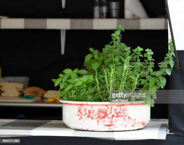 Different culinary fresh  herbs
