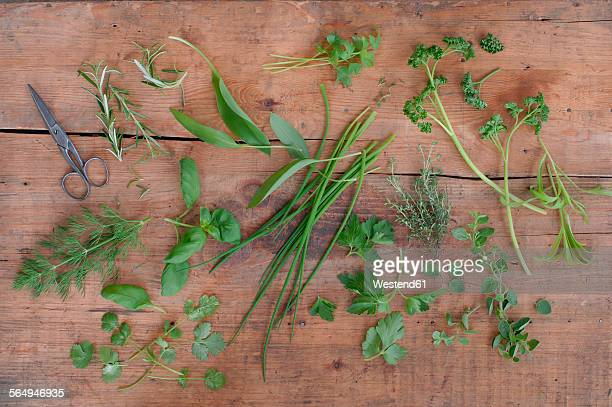 Different culinary herbs and scissors on wood