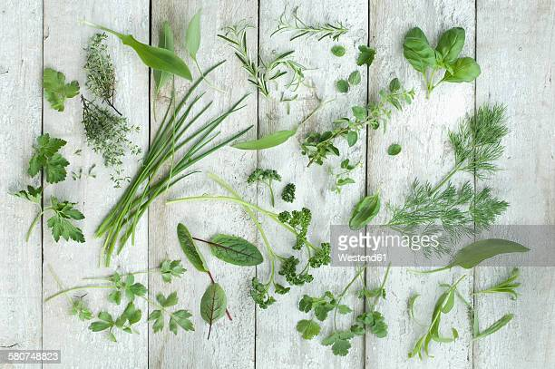Different fresh herbs on white wood