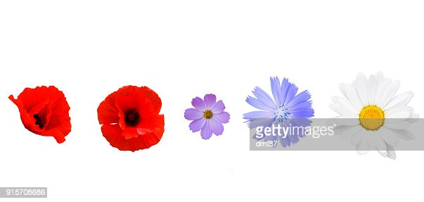 Different garden flowers on white background : Stock Photo