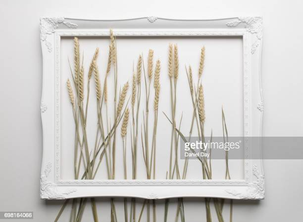 Different grasses within a white picture frame on a white background