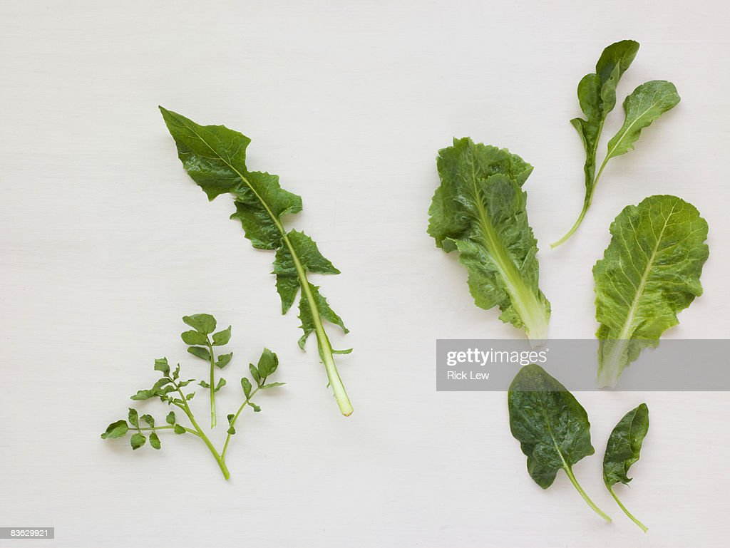 different kinds of Lettuce : Stock Photo