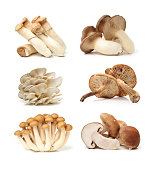 different mushrooms on a white background