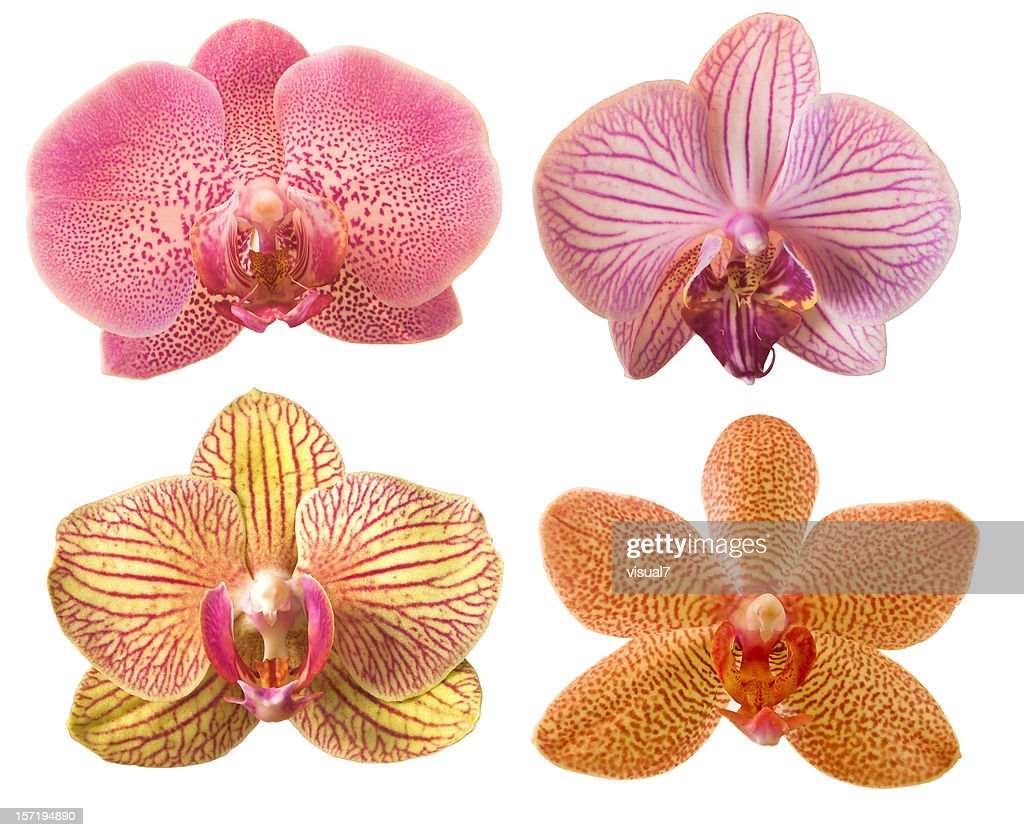 different orchids : Stock Photo