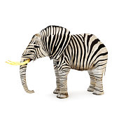 Elephant with zebra stripes on a white background.