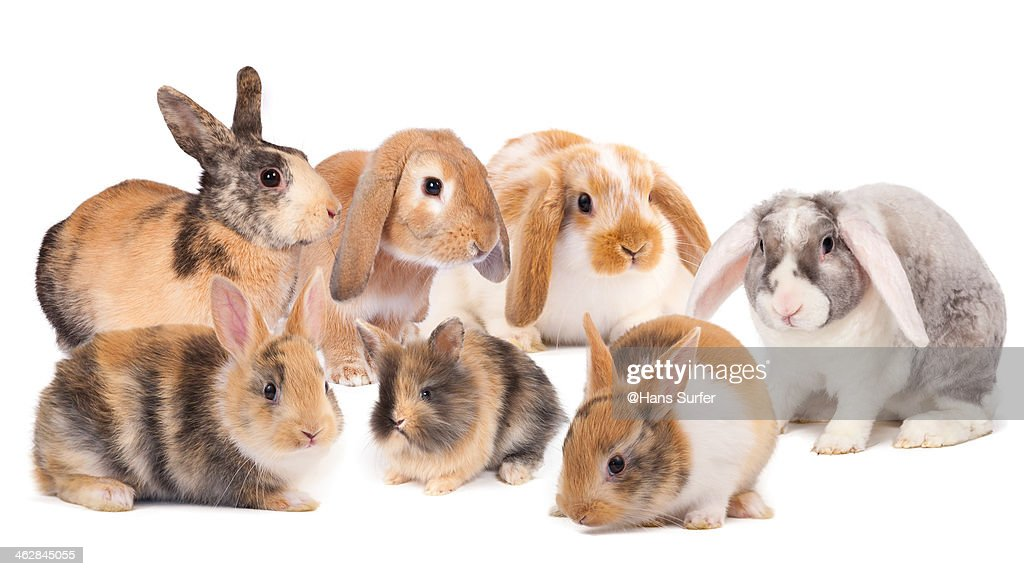 7 different Rabbits!