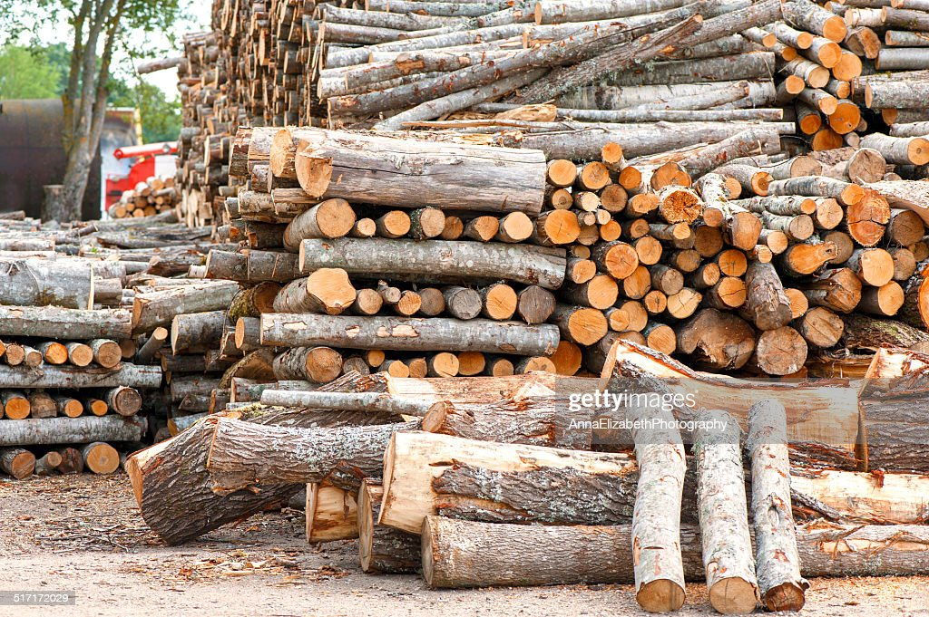 Different Size Stacked Wood Logs. Outdoors Storage. : Stock Photo