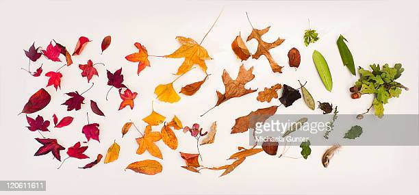 Different types of Autumn leaves.