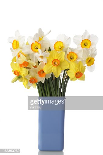 Different Types Of Daffodils In Vase Stock Photo Getty
