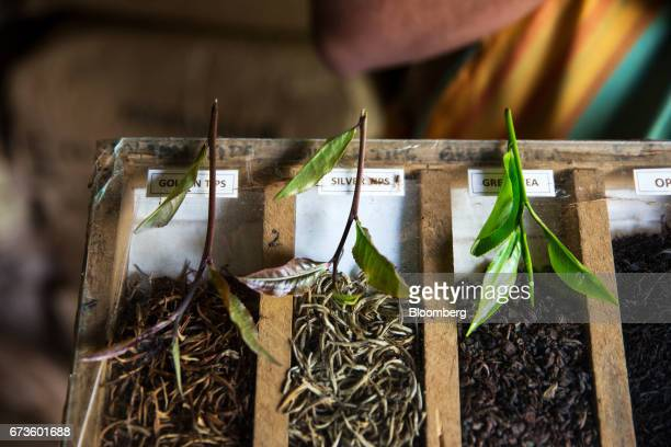 Different types of fresh tea leaves sit alongside processed leaves at the factory of the Geragama Tea Estate operated by Pussellawa Plantations Ltd...