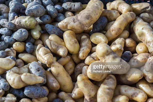 Different varieties of local organic potatoes at the Union Square Greenmarket in New York on Saturday November 8 2014 A recent study suggests that...