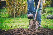 Gardener digging in a garden with a spade. Man using a big shovel for digging old lawn. Foot in motion.