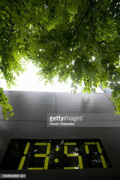 Digital clock and trees, low angle view