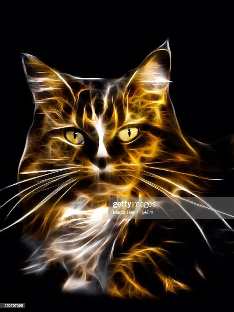 Digital Composite Image Of Cat