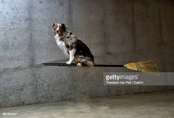 Digital Composite Image Of Dog Flying On Broom Against Wall