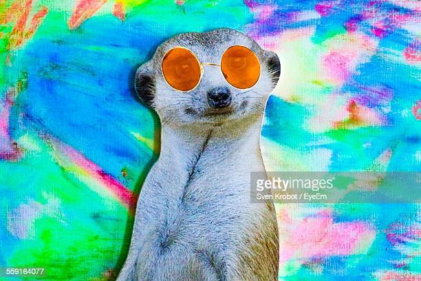 Digital Composite Image Of Meerkat Wearing Glasses Against Colorful Wall