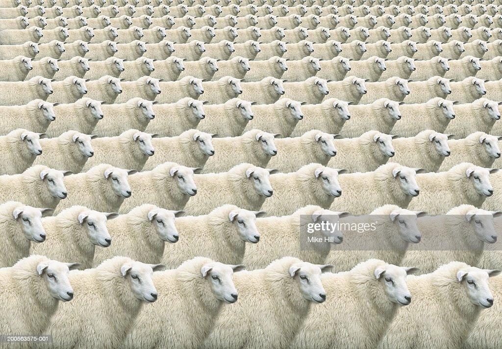 Digital composite of flock of identical sheep, full frame