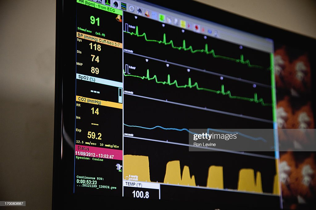 Digital panel showing vital signs at Vet clinic : Stock Photo