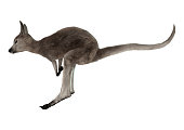 3D digital render of a jumping grey baby kangaroo isolated on white background
