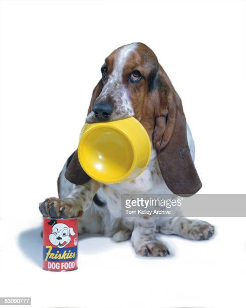 Digitally manipulated image of a bassett hound as it holds a yellow food bowl in its mouth and rests a paw on top of an unopenned can of Friskies...