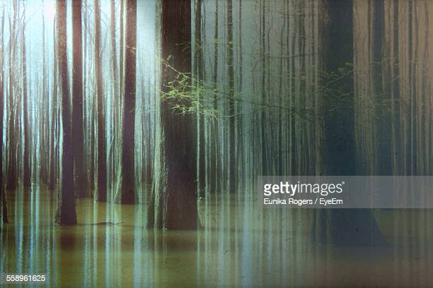 Digitally Manipulated Image Of Tree Trunks In Forest