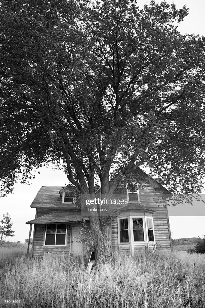 Dilapidated house with tree : Stock Photo