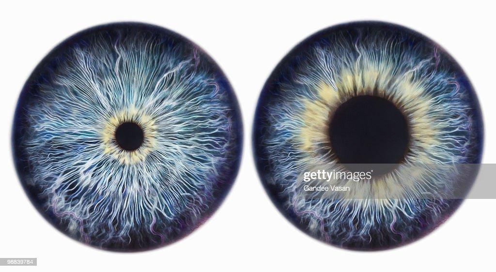 Dilating Iris : Stock Photo