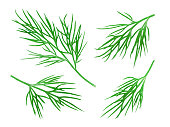 Dill Collection. Fresh Dill Herb Isolated on White. Clipping Path