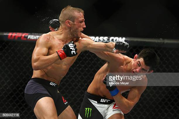 J Dillashaw fights Dominick Cruz in their bantamweight bout during UFC Fight Night 81 at TD Banknorth Garden on January 17 2016 in Boston...