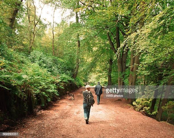 Dog Walking In Staffordshire Moorlands
