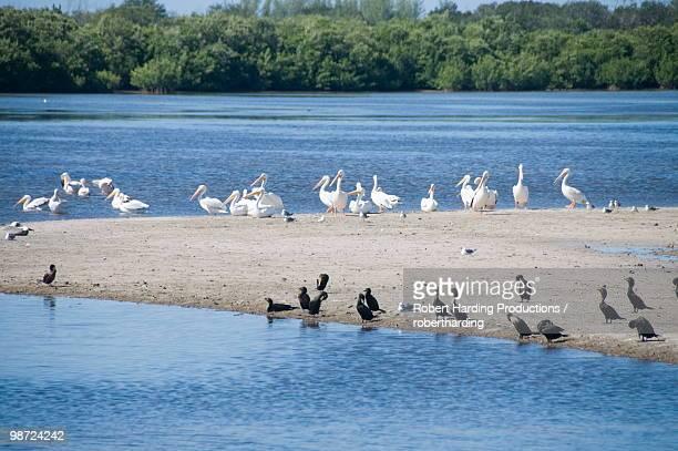 J.N. 'Ding' Darling Wildlife Reserve, Sanibel Island, Gulf Coast, Florida, United States of America, North America