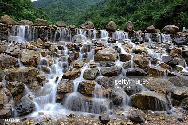 Dinghai tea valley,Zhoushan,Zhejiang province,China