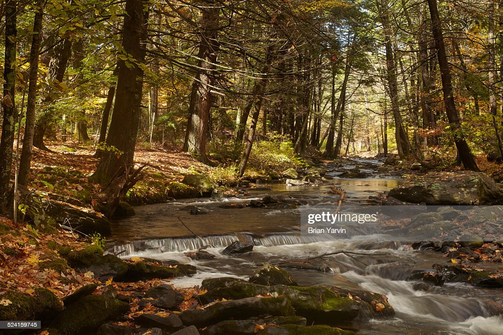 Dingman's Creek, Fall, Pocono Mtns. PA