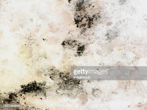 A dingy white surface with blotches of moldy stains