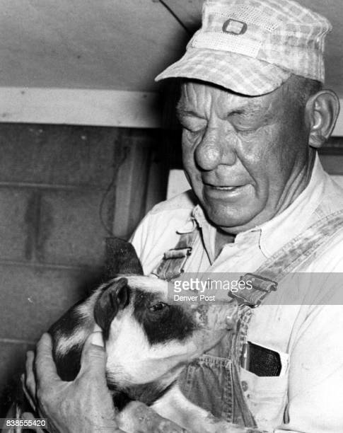 Dinner Table Future Victor Engdahl holds a 3weekold meattype porker at his farm This is bred and fed for meat not lard Credit Denver Post