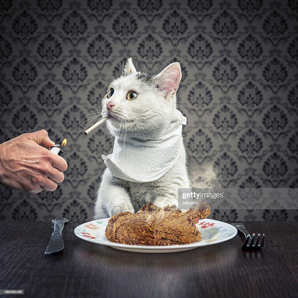 Dinner time : Stock Photo