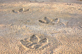 Dinosaur footprints found in the rocks.