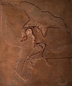 Dinosaur fossils of Archaeopteryx in the rock