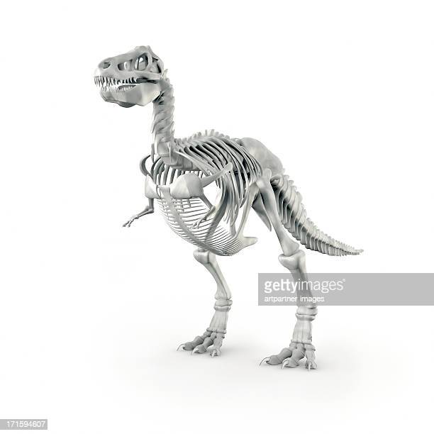 Dinosaur skeleton (T-Rex) on white background