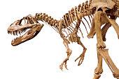 Dinosaur skeleton over white isolated background.